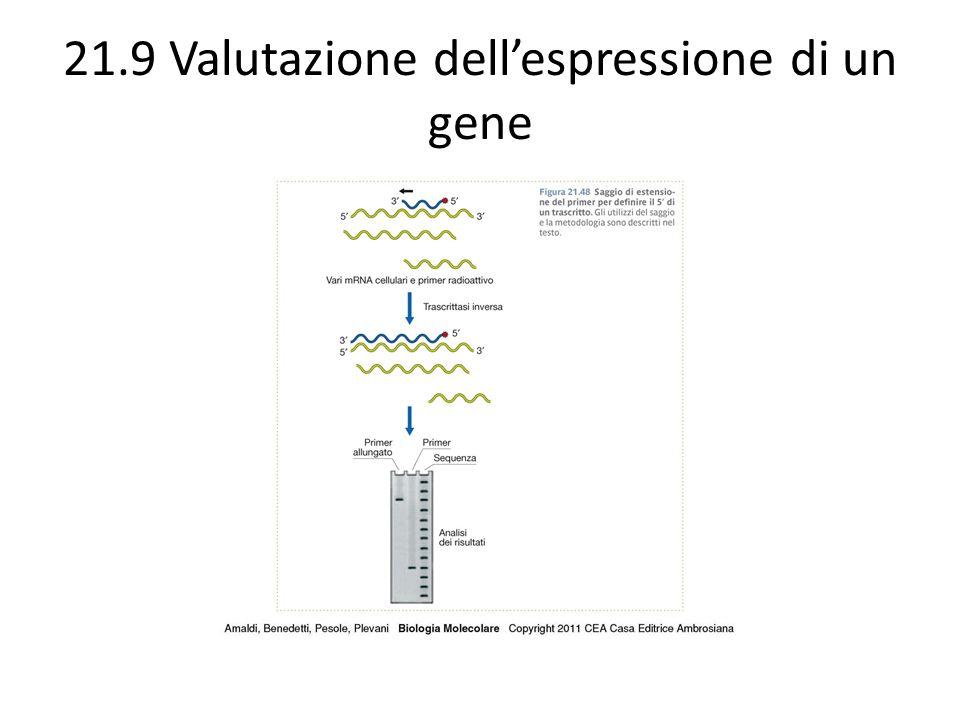 21.9 Valutazione dell'espressione di un gene