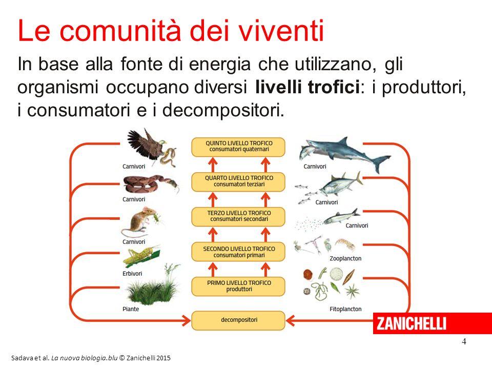 5 Le reti alimentari /1 Le reti alimentari sono diagrammi che illustrano i ruoli svolti dai vari organismi viventi all'interno di una comunità.