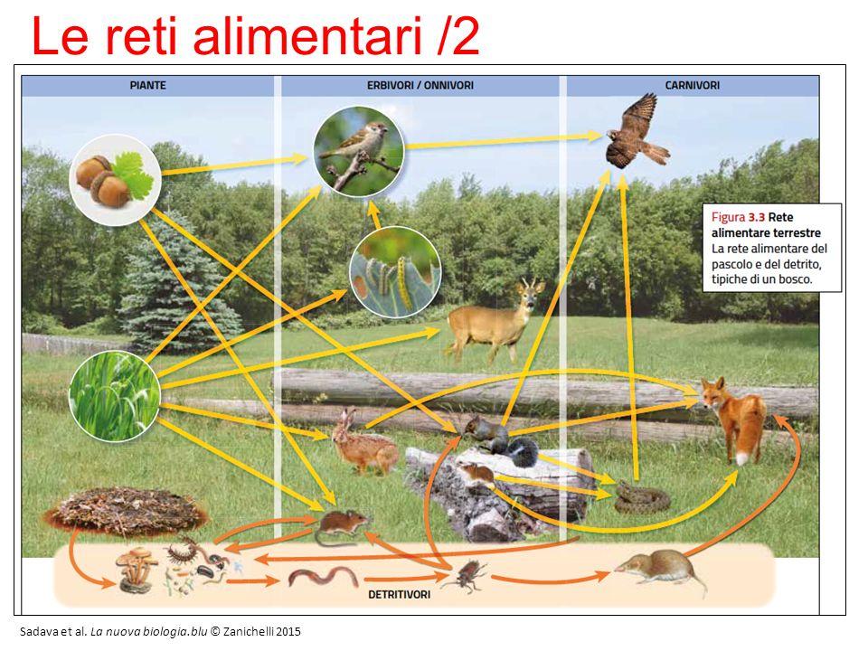 Le reti alimentari /3 Sadava et al. La nuova biologia.blu © Zanichelli 2015 7