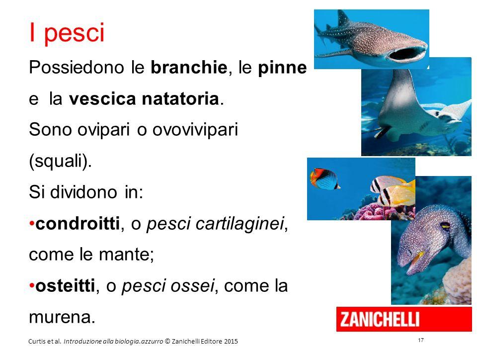 17 Curtis et al. Introduzione alla biologia.azzurro © Zanichelli Editore 2015 I pesci Possiedono le branchie, le pinne e la vescica natatoria. Sono ov