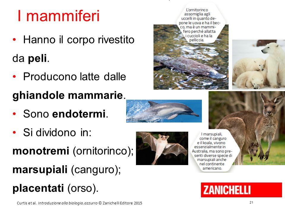 21 Curtis et al. Introduzione alla biologia.azzurro © Zanichelli Editore 2015 I mammiferi Hanno il corpo rivestito da peli. Producono latte dalle ghia
