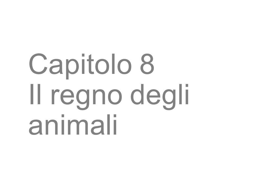 3 Capitolo 8 Il regno degli animali