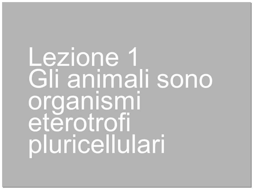 4 Lezione 1 Gli animali sono organismi eterotrofi pluricellulari