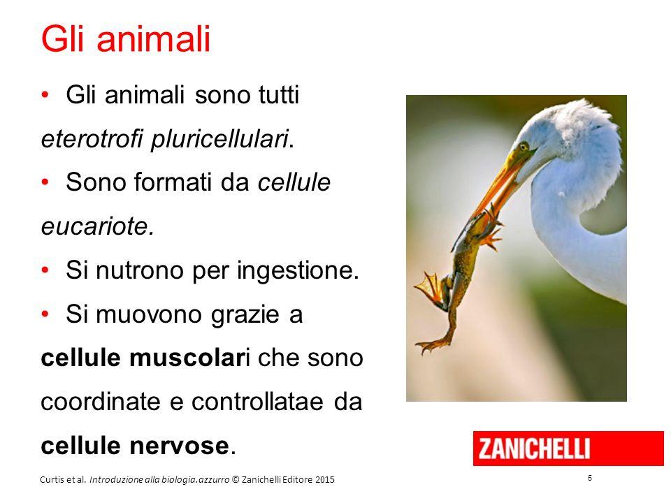 5 5 Curtis et al. Introduzione alla biologia.azzurro © Zanichelli Editore 2015 Gli animali Gli animali sono tutti eterotrofi pluricellulari. Sono form