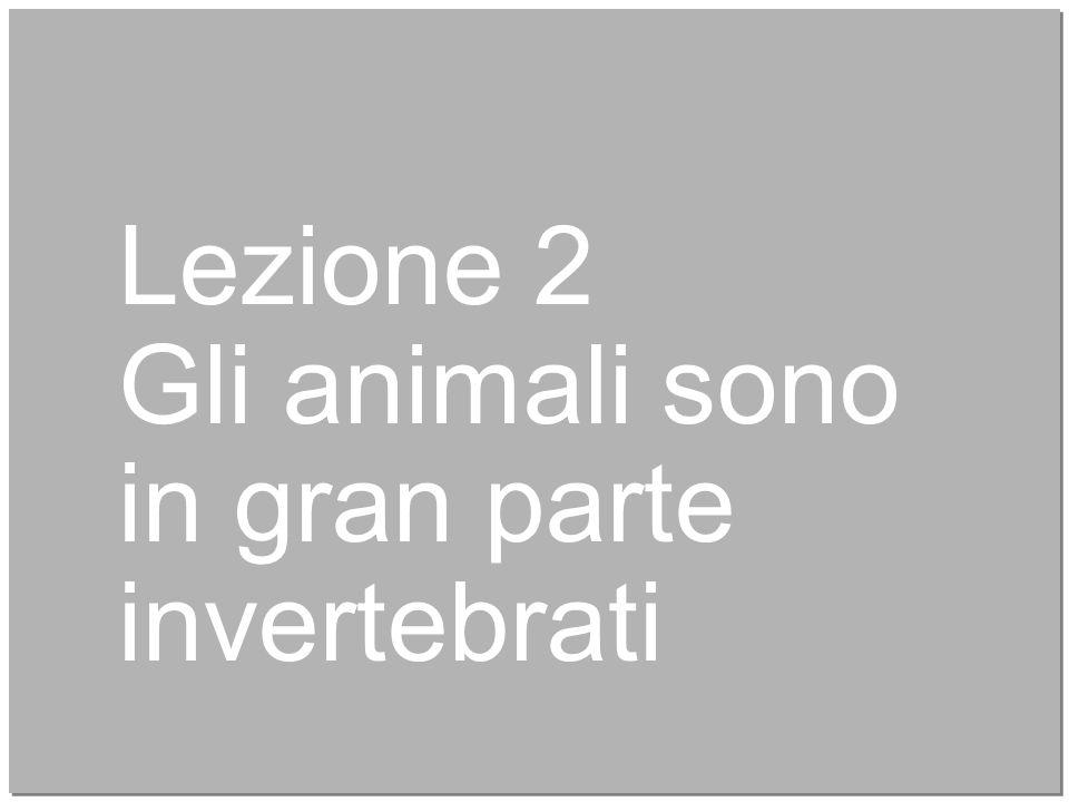 7 Lezione 2 Gli animali sono in gran parte invertebrati