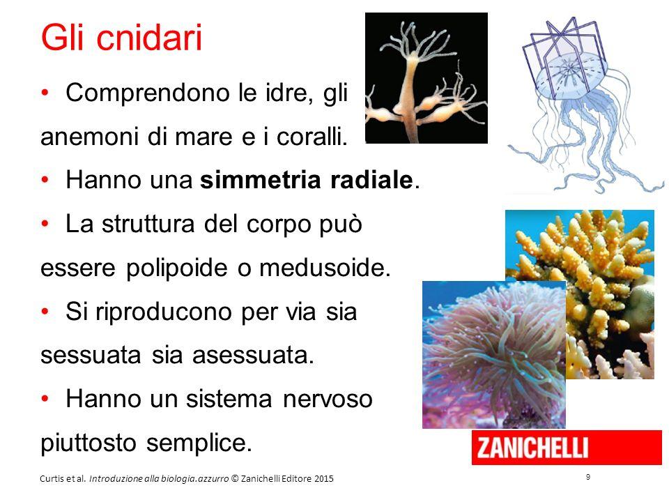 9 9 Curtis et al. Introduzione alla biologia.azzurro © Zanichelli Editore 2015 Gli cnidari Comprendono le idre, gli anemoni di mare e i coralli. Hanno