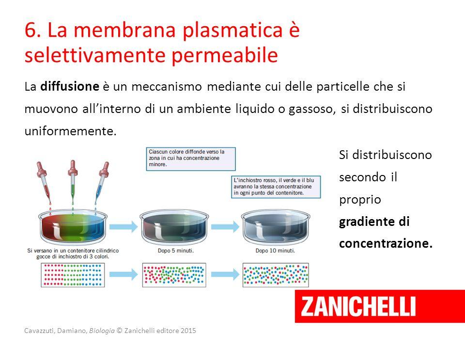 Cavazzuti, Damiano, Biologia © Zanichelli editore 2015 6. La membrana plasmatica è selettivamente permeabile La diffusione è un meccanismo mediante cu
