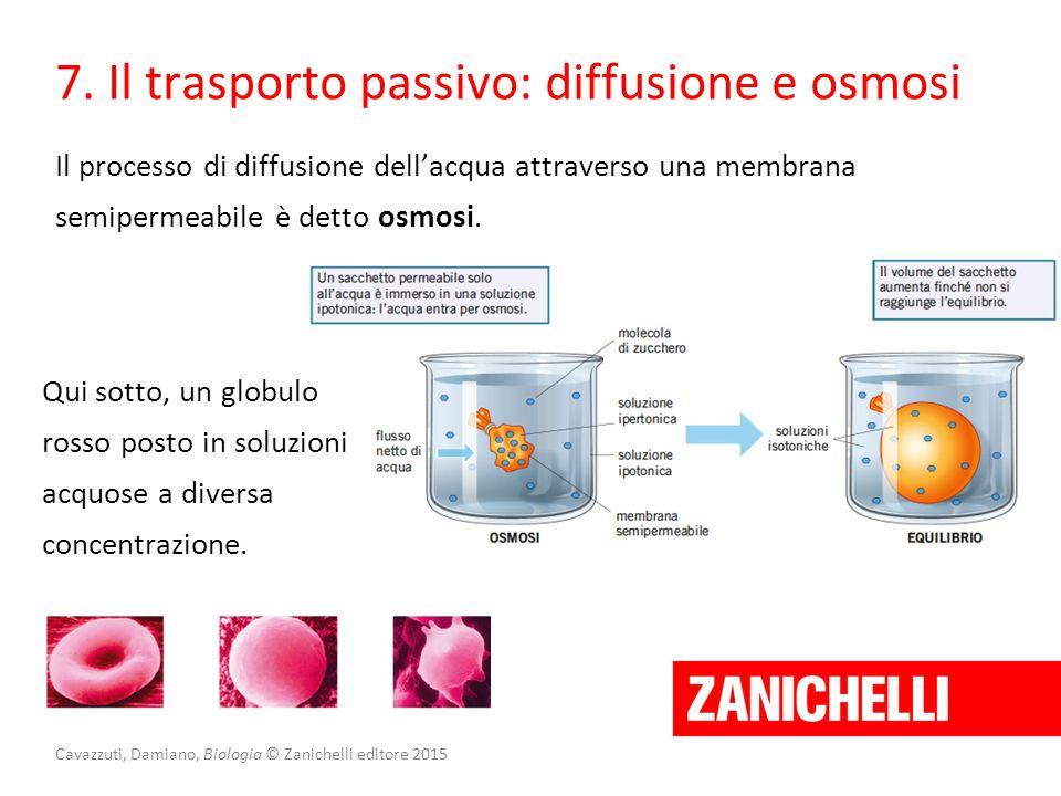 Cavazzuti, Damiano, Biologia © Zanichelli editore 2015 7. Il trasporto passivo: diffusione e osmosi Il processo di diffusione dell'acqua attraverso un