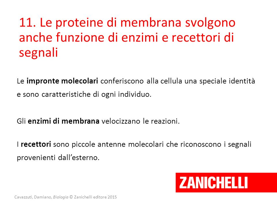 Cavazzuti, Damiano, Biologia © Zanichelli editore 2015 11. Le proteine di membrana svolgono anche funzione di enzimi e recettori di segnali Le impront
