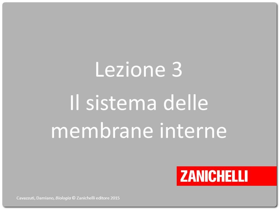 Lezione 3 Il sistema delle membrane interne Cavazzuti, Damiano, Biologia © Zanichelli editore 2015