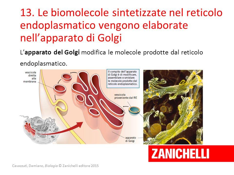 Cavazzuti, Damiano, Biologia © Zanichelli editore 2015 13. Le biomolecole sintetizzate nel reticolo endoplasmatico vengono elaborate nell'apparato di