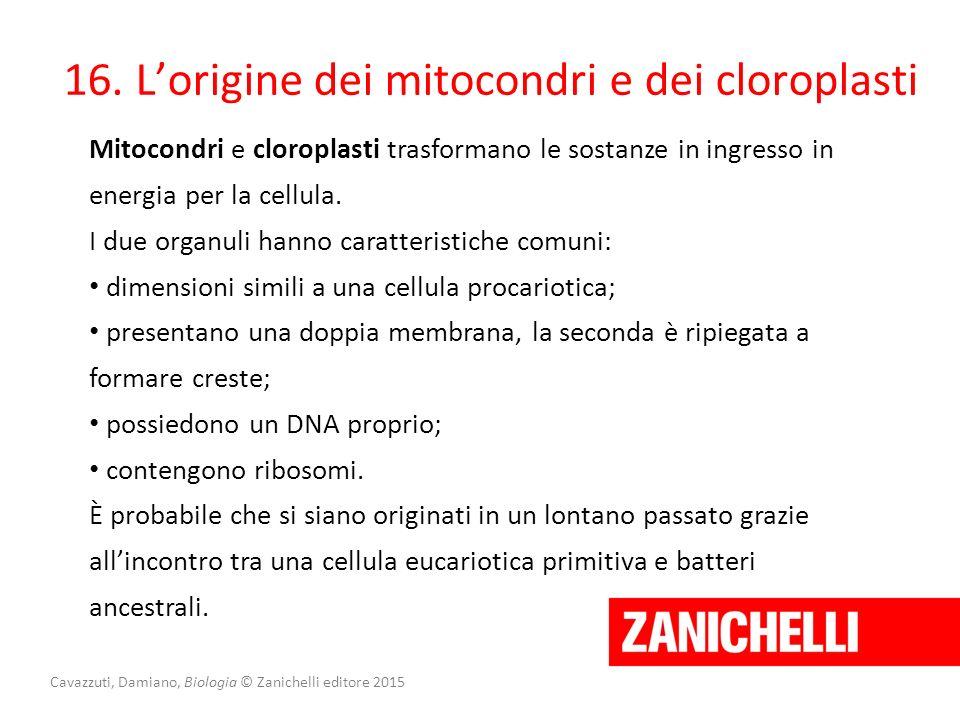 16. L'origine dei mitocondri e dei cloroplasti Mitocondri e cloroplasti trasformano le sostanze in ingresso in energia per la cellula. I due organuli