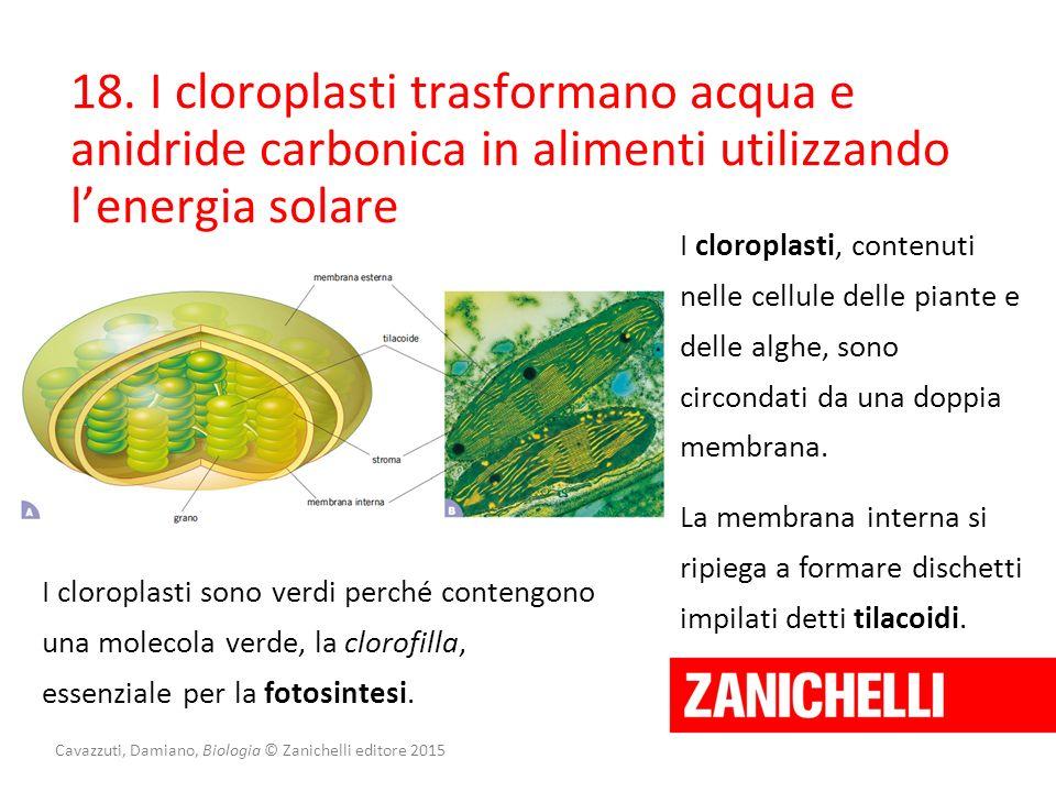 Cavazzuti, Damiano, Biologia © Zanichelli editore 2015 18. I cloroplasti trasformano acqua e anidride carbonica in alimenti utilizzando l'energia sola