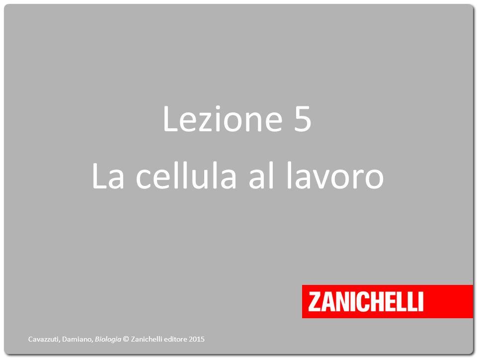 Lezione 5 La cellula al lavoro Cavazzuti, Damiano, Biologia © Zanichelli editore 2015