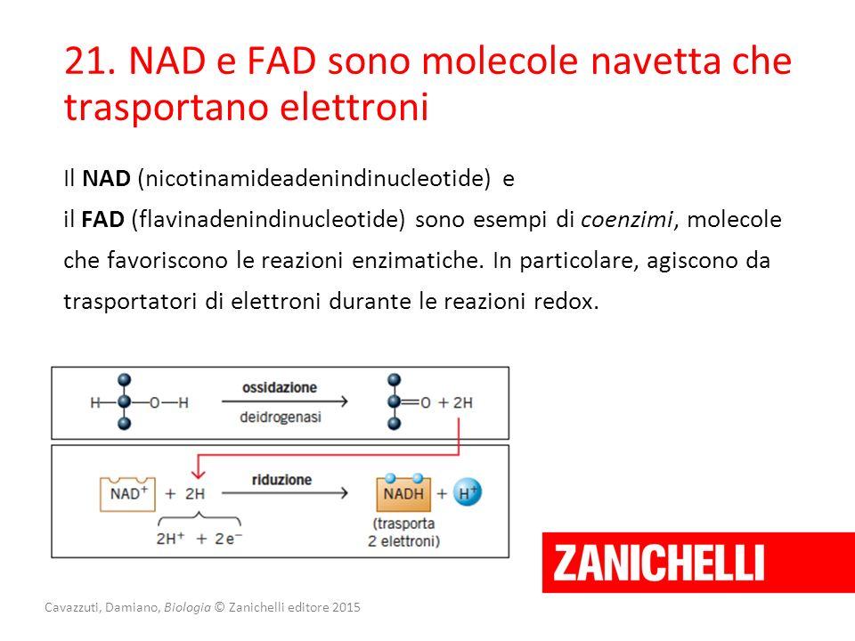 Cavazzuti, Damiano, Biologia © Zanichelli editore 2015 21. NAD e FAD sono molecole navetta che trasportano elettroni Il NAD (nicotinamideadenindinucle