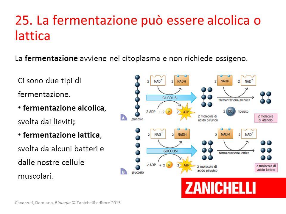Cavazzuti, Damiano, Biologia © Zanichelli editore 2015 25. La fermentazione può essere alcolica o lattica La fermentazione avviene nel citoplasma e no