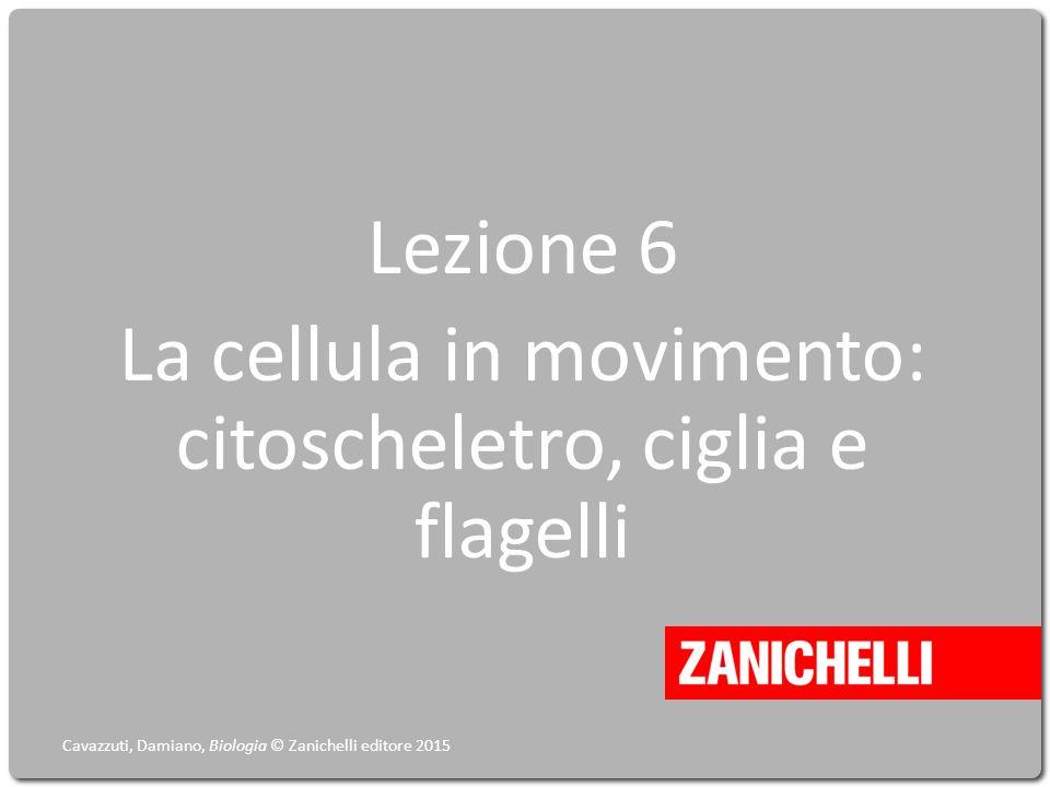 Lezione 6 La cellula in movimento: citoscheletro, ciglia e flagelli Cavazzuti, Damiano, Biologia © Zanichelli editore 2015