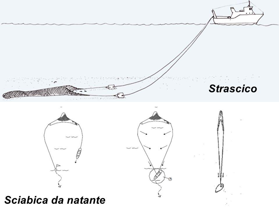 Sciabica da natante Strascico