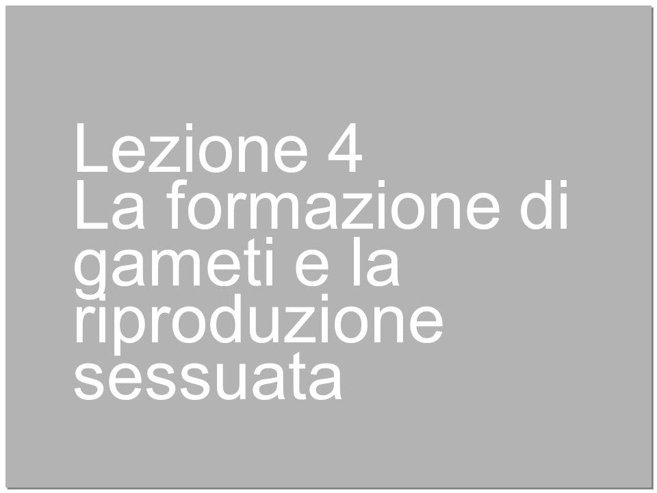 16 Lezione 4 La formazione di gameti e la riproduzione sessuata