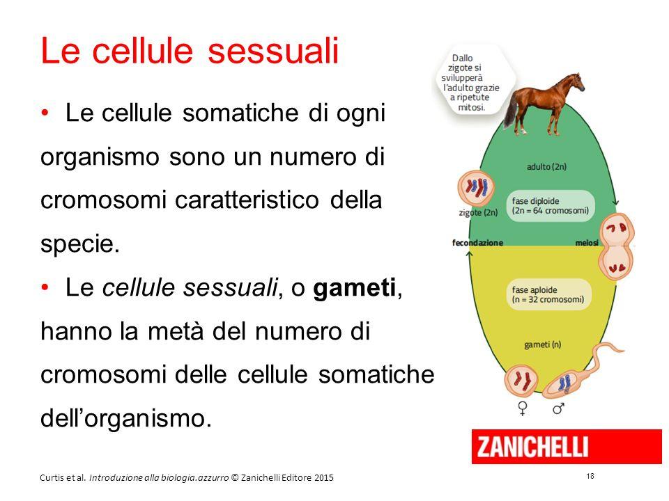 18 Curtis et al. Introduzione alla biologia.azzurro © Zanichelli Editore 2015 Le cellule sessuali Le cellule somatiche di ogni organismo sono un numer