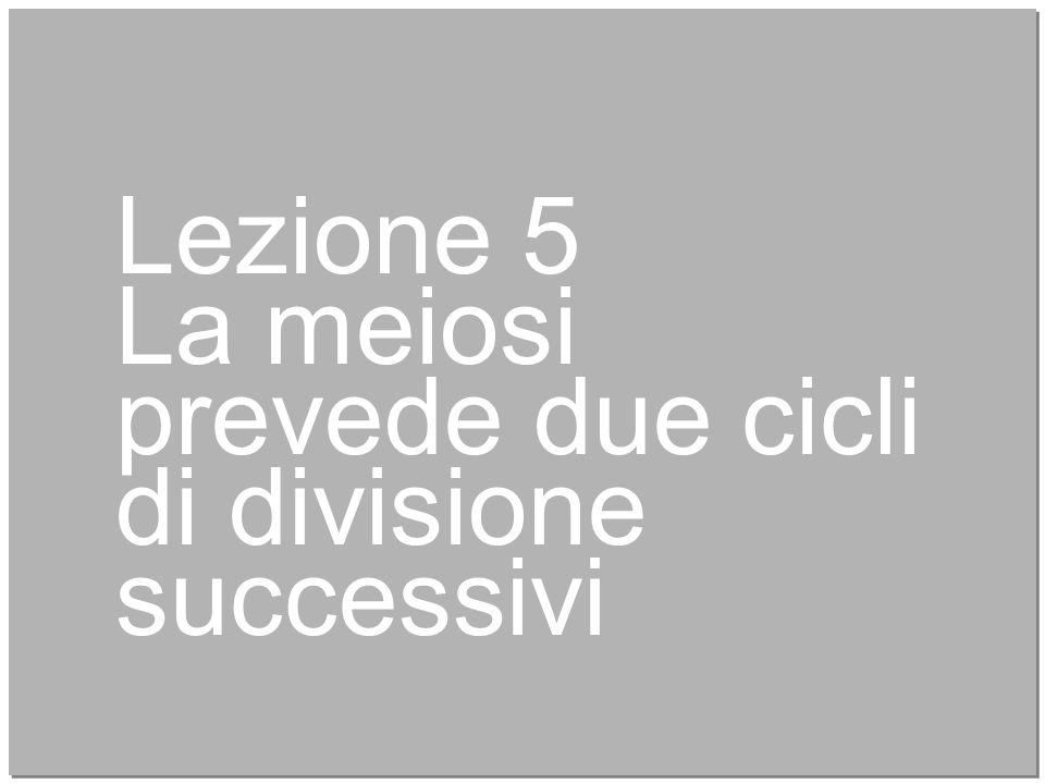20 Lezione 5 La meiosi prevede due cicli di divisione successivi