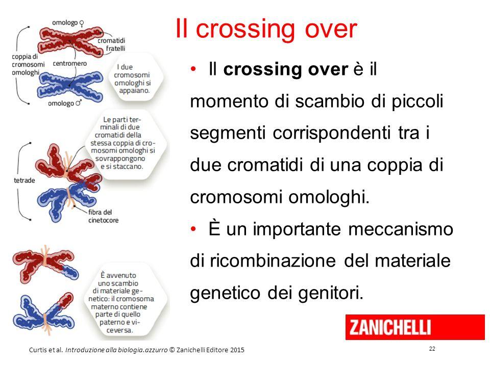 22 Curtis et al. Introduzione alla biologia.azzurro © Zanichelli Editore 2015 Il crossing over Il crossing over è il momento di scambio di piccoli seg
