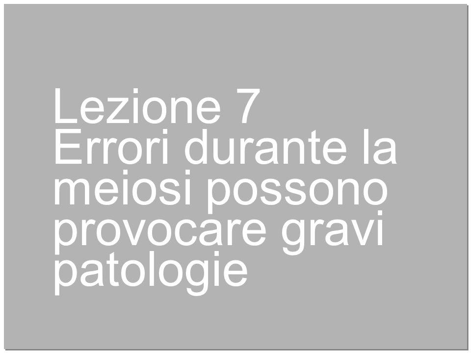 27 Lezione 7 Errori durante la meiosi possono provocare gravi patologie