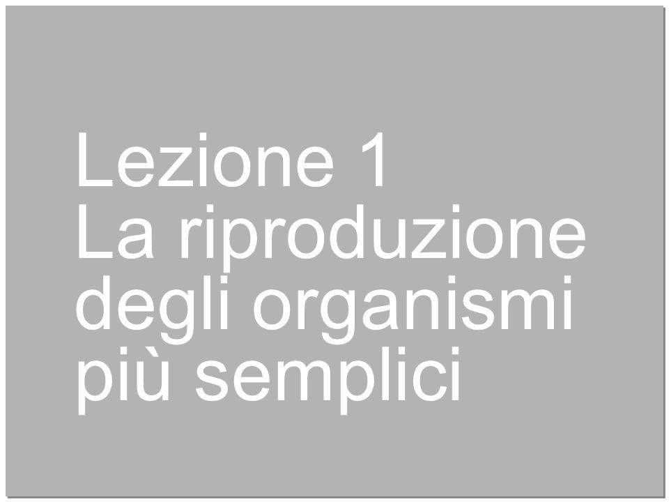 4 Lezione 1 La riproduzione degli organismi più semplici