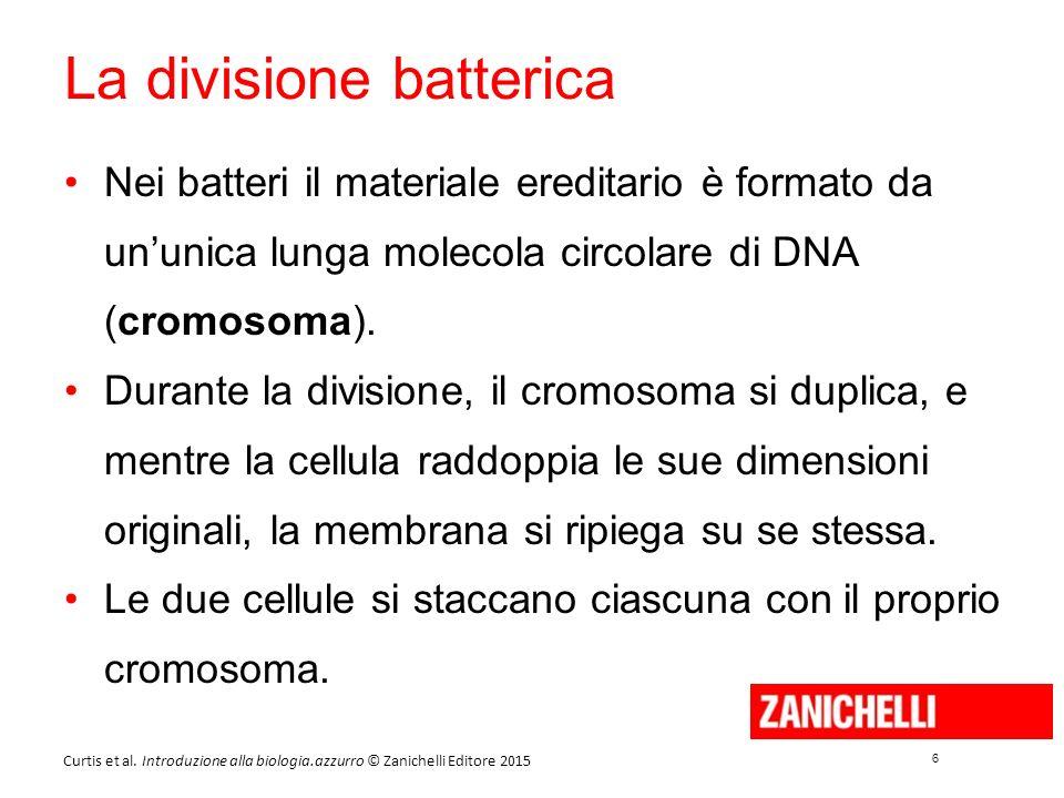 6 6 Curtis et al. Introduzione alla biologia.azzurro © Zanichelli Editore 2015 La divisione batterica Nei batteri il materiale ereditario è formato da