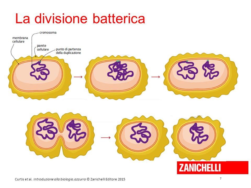 7 7 Curtis et al. Introduzione alla biologia.azzurro © Zanichelli Editore 2015 La divisione batterica