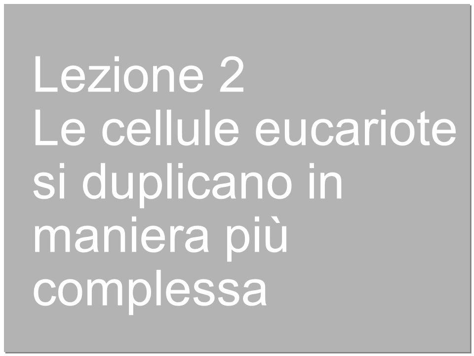 8 Lezione 2 Le cellule eucariote si duplicano in maniera più complessa