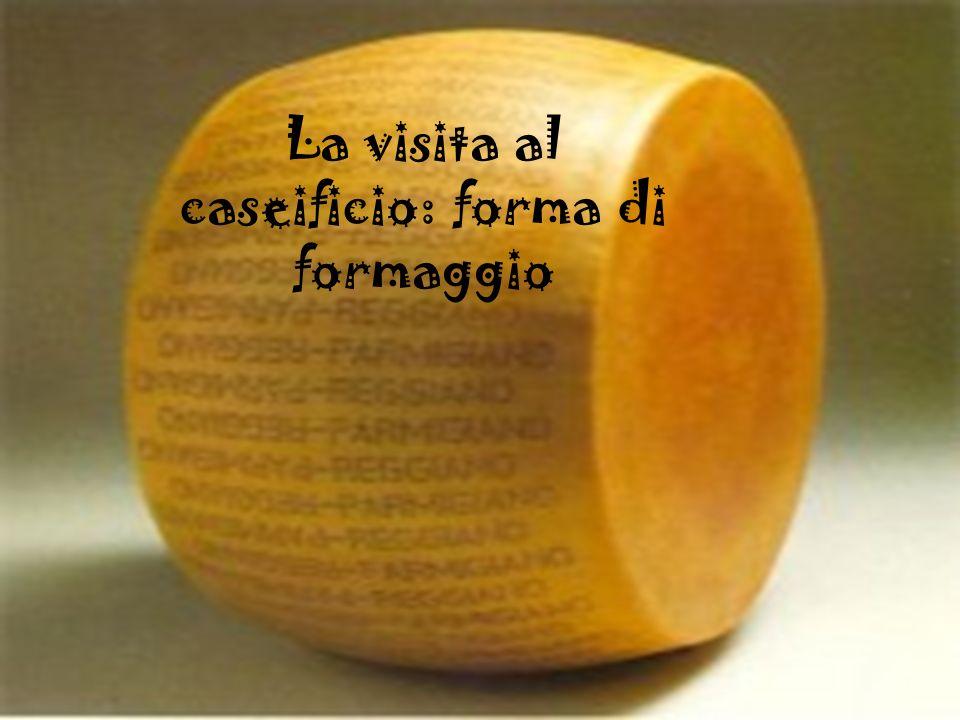La visita al caseificio: forma di formaggio