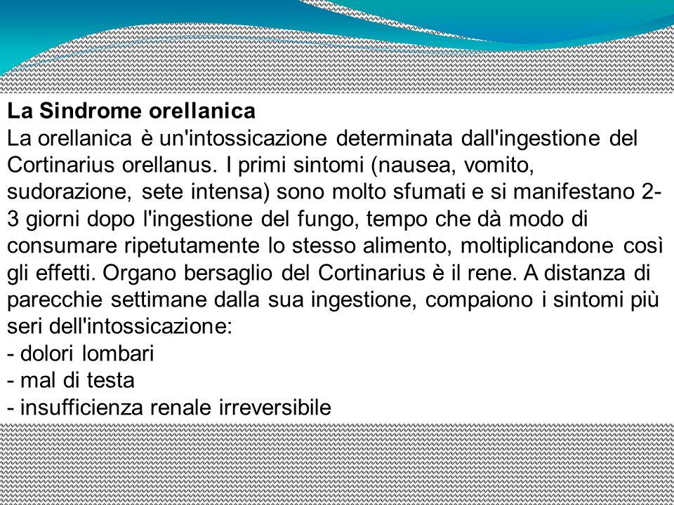 La Sindrome orellanica La orellanica è un'intossicazione determinata dall'ingestione del Cortinarius orellanus. I primi sintomi (nausea, vomito, sudor