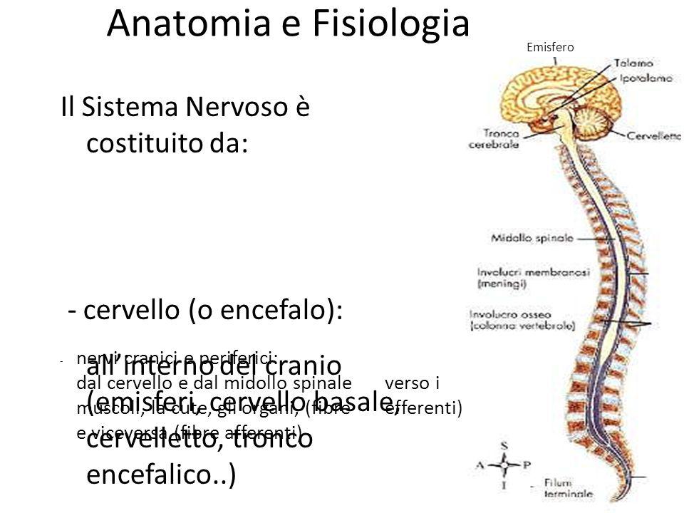 Anatomia e Fisiologia L'unità di funzionamento del sistema nervoso è la cellula nervosa (o neurone).