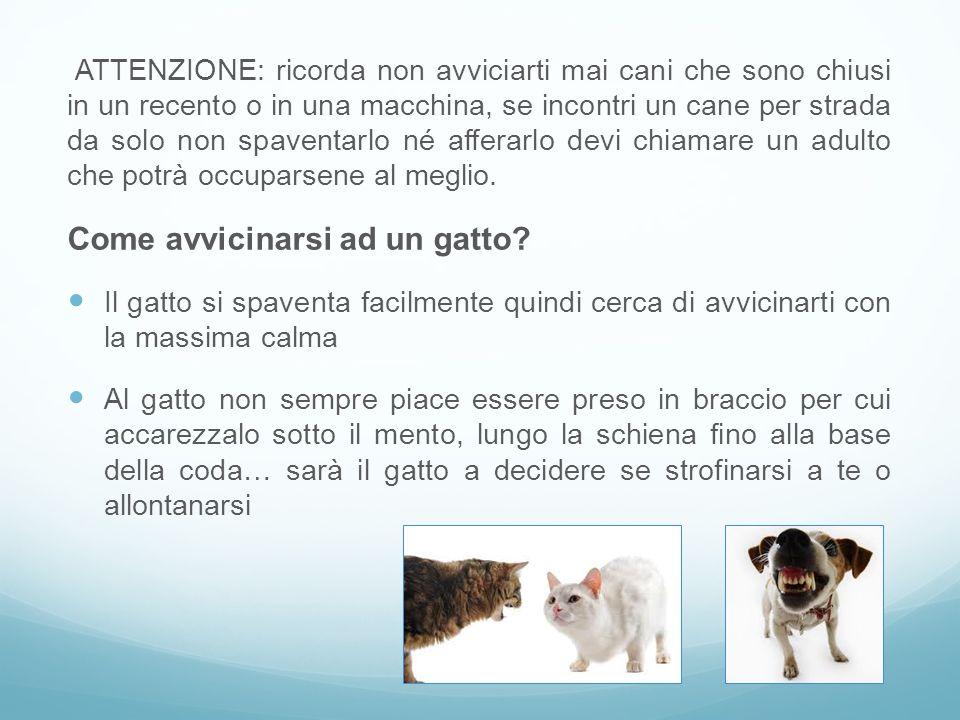 ATTENZIONE: ricorda non avviciarti mai cani che sono chiusi in un recento o in una macchina, se incontri un cane per strada da solo non spaventarlo né