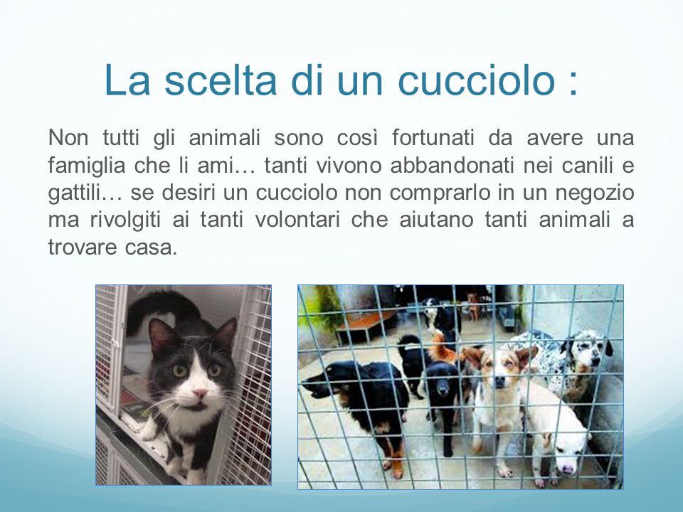 La scelta di un cucciolo : Non tutti gli animali sono così fortunati da avere una famiglia che li ami… tanti vivono abbandonati nei canili e gattili…
