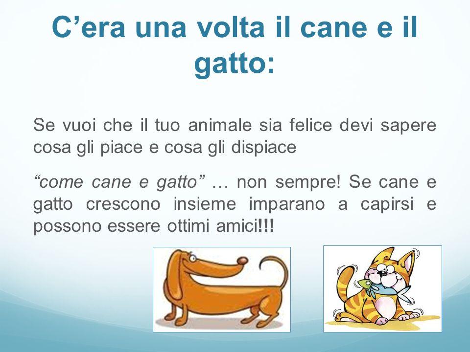 """C'era una volta il cane e il gatto: Se vuoi che il tuo animale sia felice devi sapere cosa gli piace e cosa gli dispiace """"come cane e gatto"""" … non sem"""