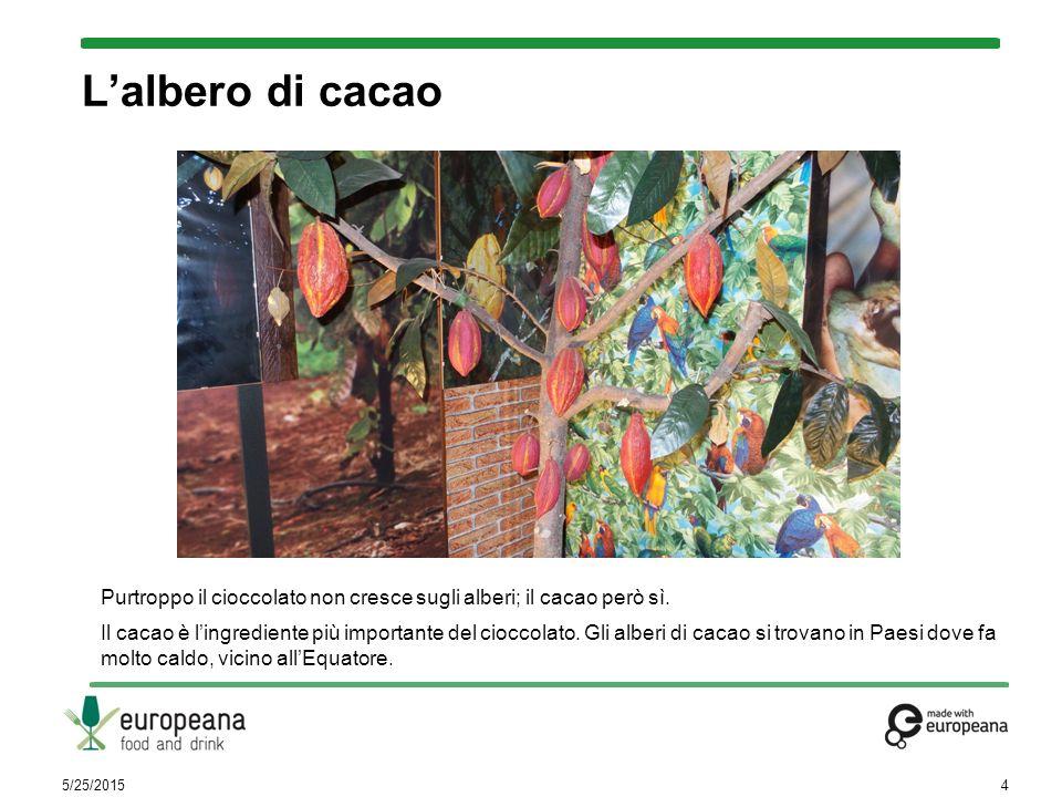 Purtroppo il cioccolato non cresce sugli alberi; il cacao però sì. Il cacao è l'ingrediente più importante del cioccolato. Gli alberi di cacao si trov