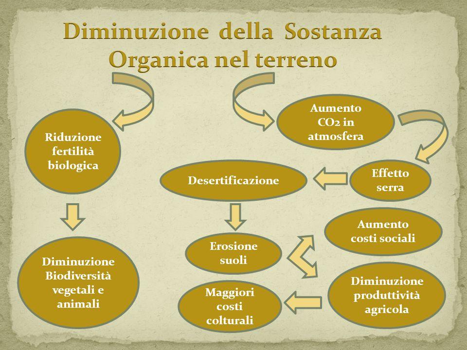 Aumento CO2 in atmosfera Effetto serra Desertificazione Erosione suoli Aumento costi sociali Diminuzione produttività agricola Maggiori costi coltural