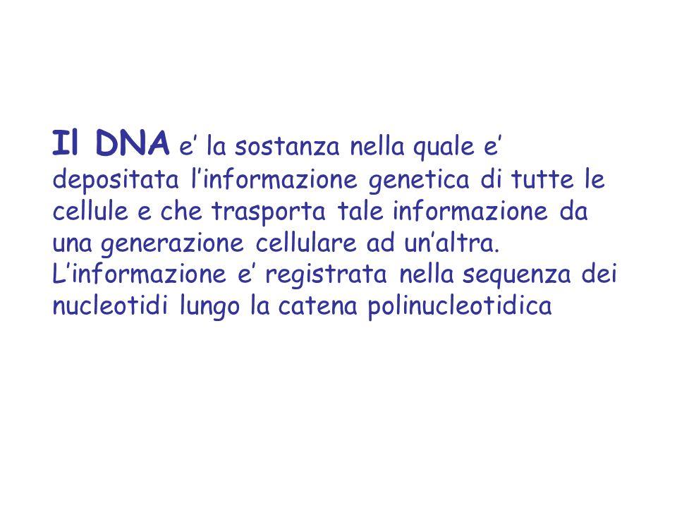 Il DNA e' la sostanza nella quale e' depositata l'informazione genetica di tutte le cellule e che trasporta tale informazione da una generazione cellulare ad un'altra.