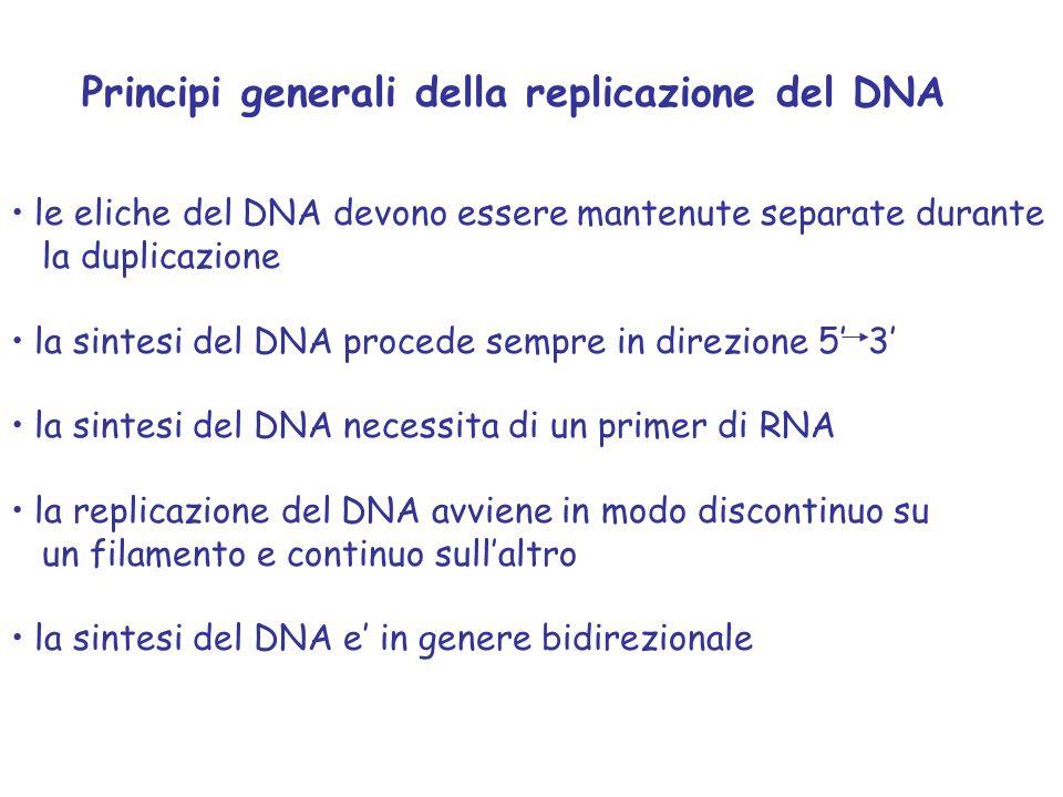 Principi generali della replicazione del DNA le eliche del DNA devono essere mantenute separate durante la duplicazione la sintesi del DNA procede sempre in direzione 5' 3' la sintesi del DNA necessita di un primer di RNA la replicazione del DNA avviene in modo discontinuo su un filamento e continuo sull'altro la sintesi del DNA e' in genere bidirezionale