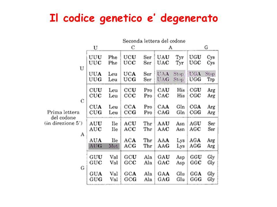 Il codice genetico e' degenerato