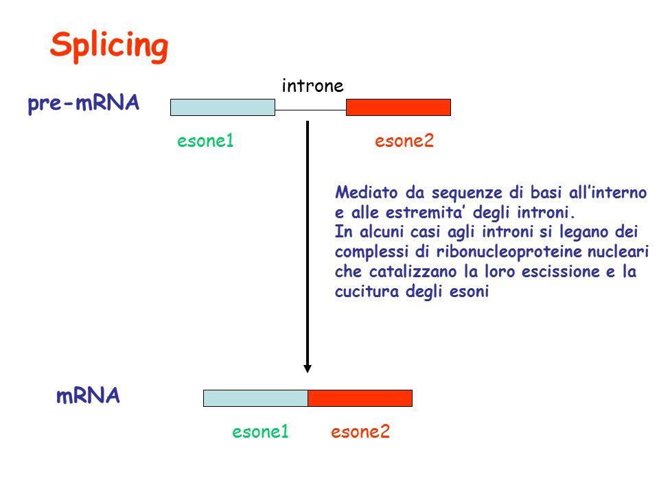 Splicing esone1esone2 introne pre-mRNA mRNA esone1esone2 Mediato da sequenze di basi all'interno e alle estremita' degli introni.