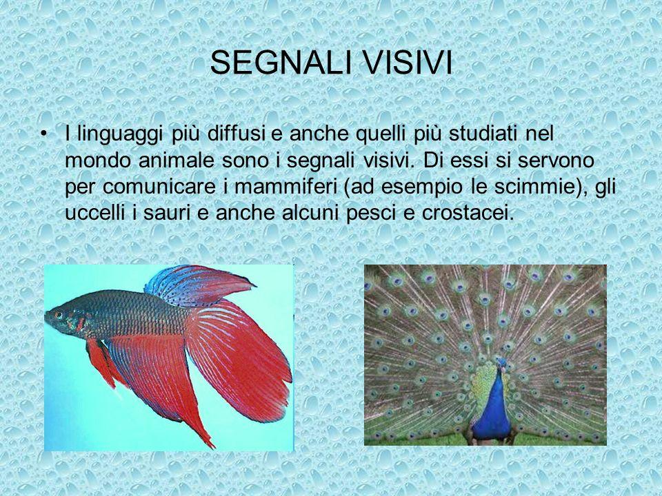 SEGNALI VISIVI I linguaggi più diffusi e anche quelli più studiati nel mondo animale sono i segnali visivi. Di essi si servono per comunicare i mammif