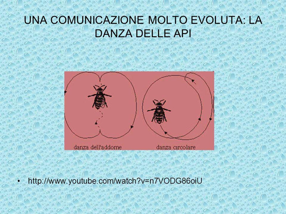 UNA COMUNICAZIONE MOLTO EVOLUTA: LA DANZA DELLE API http://www.youtube.com/watch?v=n7VODG86oiU