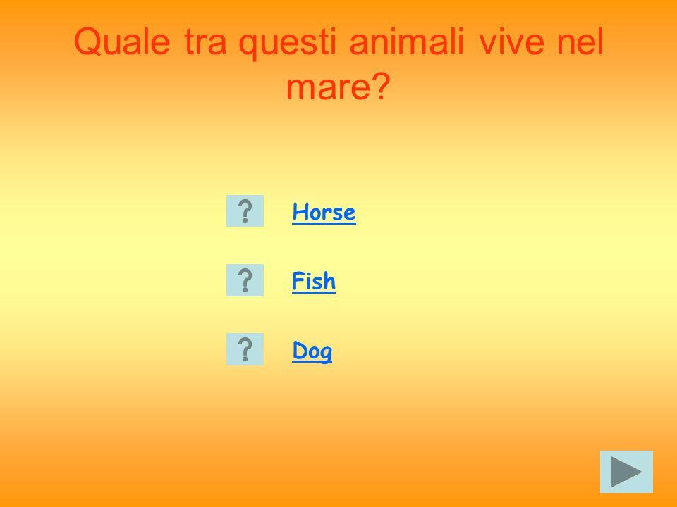 Quale tra questi animali vive nel mare Horse Fish Dog