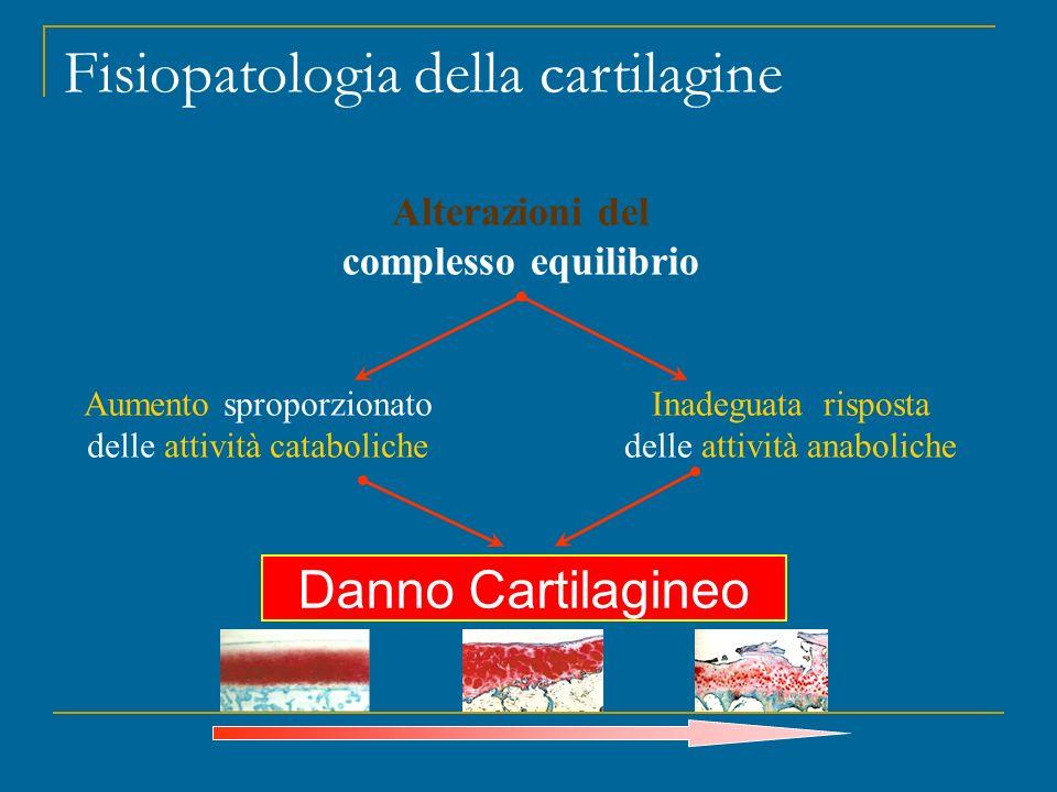 Fisiopatologia della cartilagine Alterazioni del complesso equilibrio Danno Cartilagineo Aumento sproporzionato delle attività cataboliche Inadeguata
