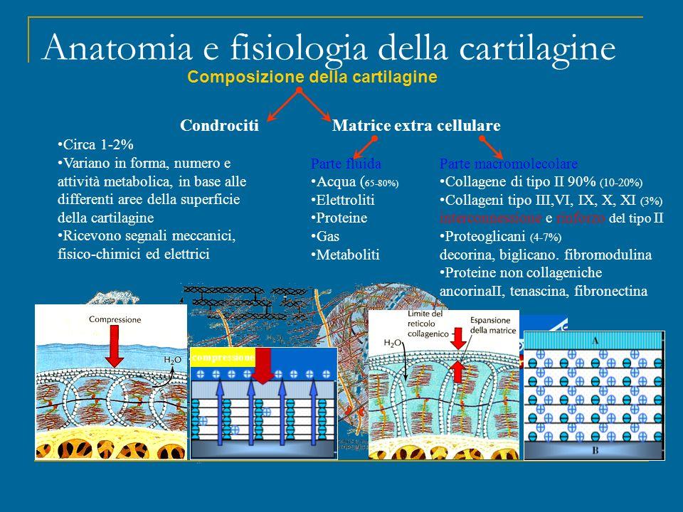 Vita media dei componenti della matrice è di alcuni mesi Anatomia e fisiologia della cartilagine Complesso equilibrio fra sintesi e degradazione cartilaginea Garanzia Elasticità, Resistenza e Durata nel tempo