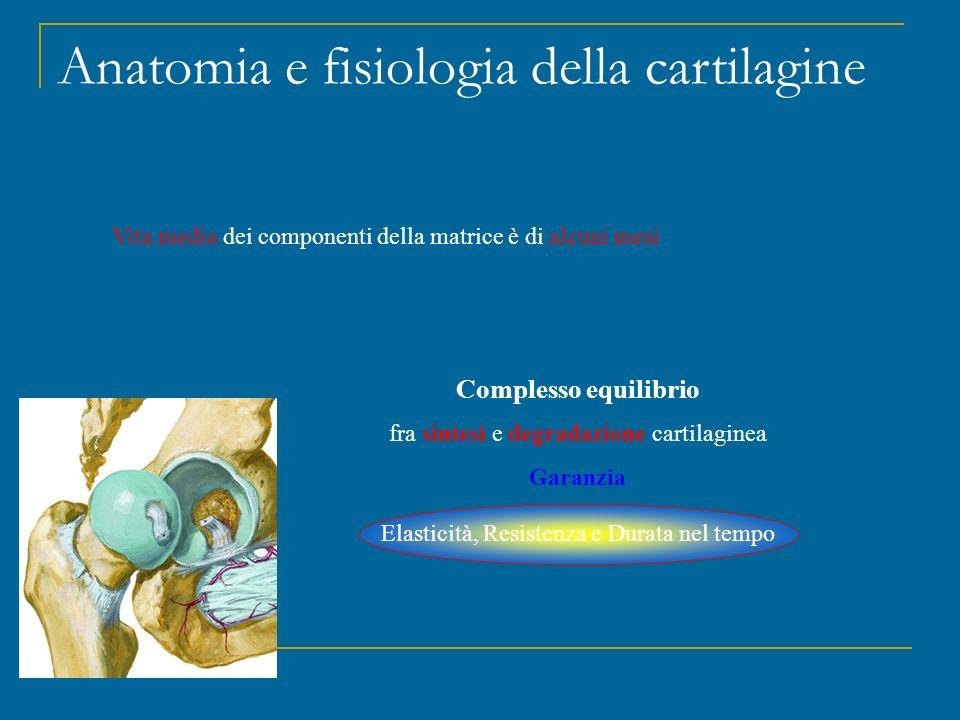 Omeostasi della cartilagine Meccanismi cataboliciSistemi di controllo Meccanismi anabolici IL-1 α – β (condrociti, sinoviociti, macrofagi) Effetti soppressivi per la sintesi di collagene e proteoglicani; Stimola il rilascio di proteasi di matrice MMP (stromelisina, serina) degradanti collagene e proteoglicani Attiva i geni iNOS e COX-2 con produzione di NO e Prostaglandine Artralgia, lassità tendinea, mialgia Deterioramento articolare per riassorbimento osseo mediante IL-1 + TNFα aumentano la sintesi di molecole di adesione ICAM-1, VCAM-1 TNFα stimola a livello condrocitico la produzione di IL-1 LIF, INF-γ, IL-12, IL-17, IL-18 Azione diretta su osteoclasti Interferenza col sistema RANKL Determina apoptosi di osteoblasti L'importanza degli enzimi Condrociti, sinoviociti, macrofagi e sistema di coagulazione possono produrre enzimi in sintonia o indipententemente senza il contributo dei condrociti Le IL-4, IL-10, IL-13 possono: inibire le IL-1 e TNFα facilitare la produzione di IL-1Ra, favorire la produzione di recettori spazzino per IL-1 e TNFα La IL-4 riduce la produzione di iNOS da parte dei condrociti ed inibisce la sintesi di Prostaglandine La IL-6 facilita l'azione di enzimi inibitori delle MMP attraverso TIMP Attivatore del Plasminogeno e Calicreina, inibiscono le MMP IL-1Ra TNFβ TIMP IGF-1 FGF PDGF TGFβ attiva i fibroblasti e riduce il catabolismo dei proteoglicani, collegato con la formazione degli osteofiti BMP-2 stimola i condrociti a sinterizzare proteoglicani Ormoni come Insulina, Androgeni, Calcitonina, G.H.
