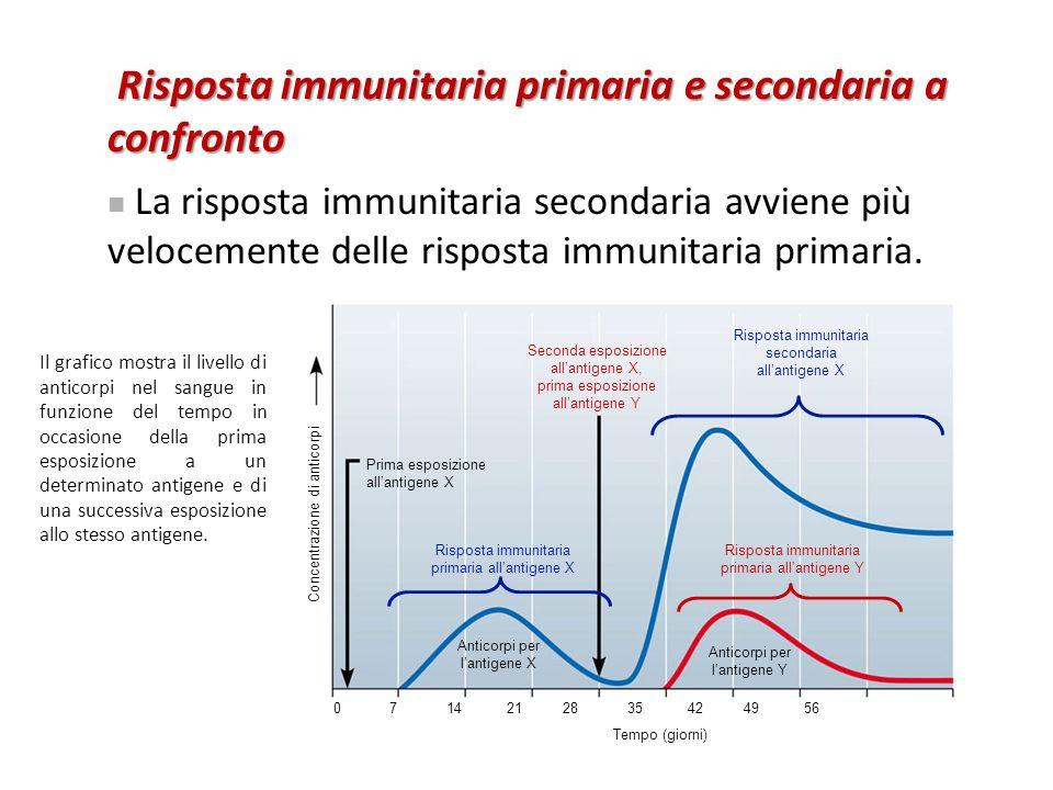 Seconda esposizione all'antigene X, prima esposizione all'antigene Y Prima esposizione all'antigene X Risposta immunitaria primaria all'antigene X Ris